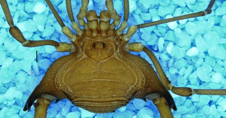 Pesquisadores concluem investigação sobre insetos em Área de Proteção